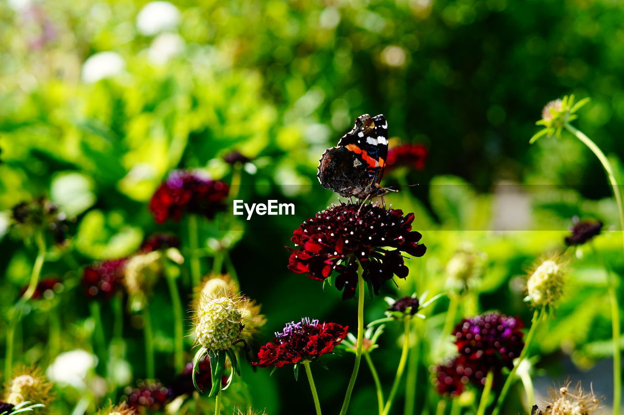 plant, flower, freshness, flowering plant, growth, beauty in nature, fragility, vulnerability, close-up, invertebrate, insect, animal themes, flower head, animals in the wild, focus on foreground, animal wildlife, nature, day, animal, no people, pollination, outdoors, butterfly - insect