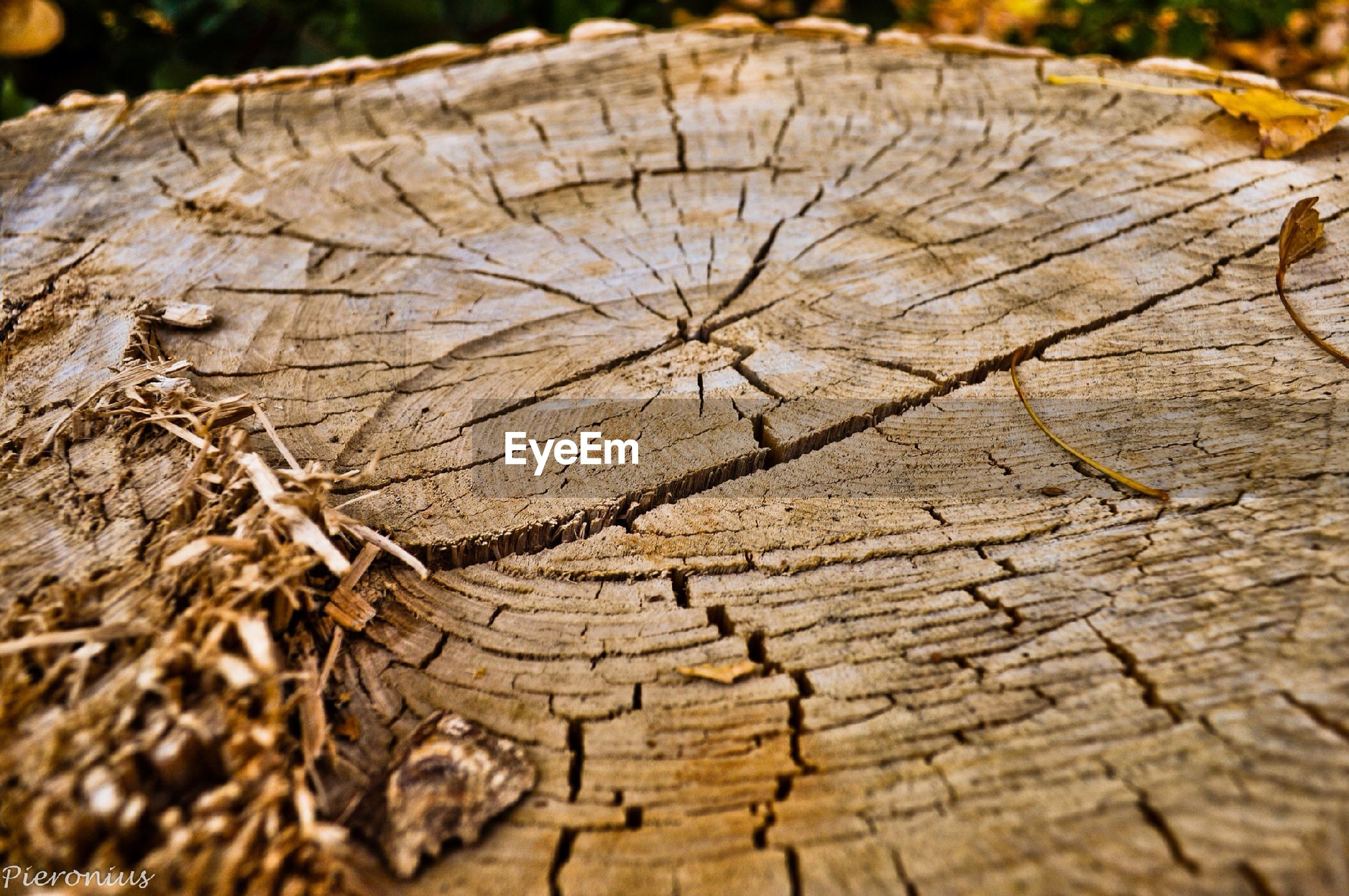 close-up, textured, natural pattern, wood - material, dry, pattern, nature, tree stump, leaf, brown, rough, full frame, cracked, focus on foreground, selective focus, fragility, day, log, outdoors, backgrounds