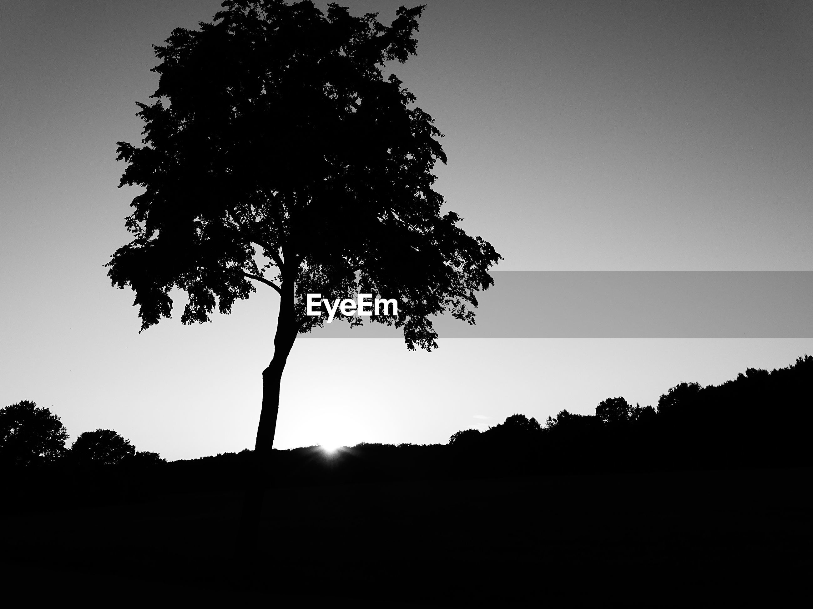 SILHOUETTE OF TREES ON FIELD AGAINST SKY