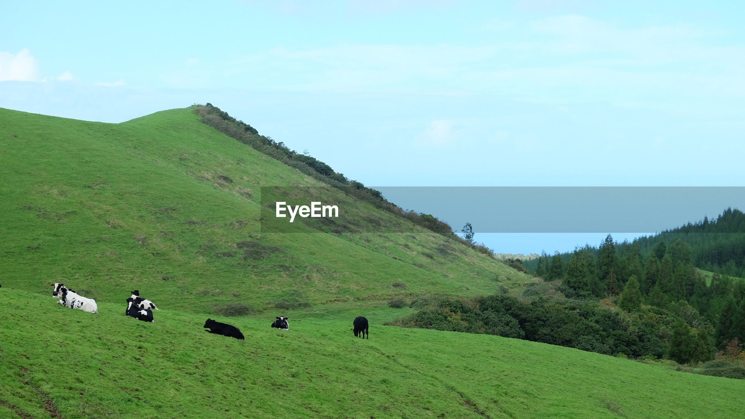 Cattle on hill against mountains