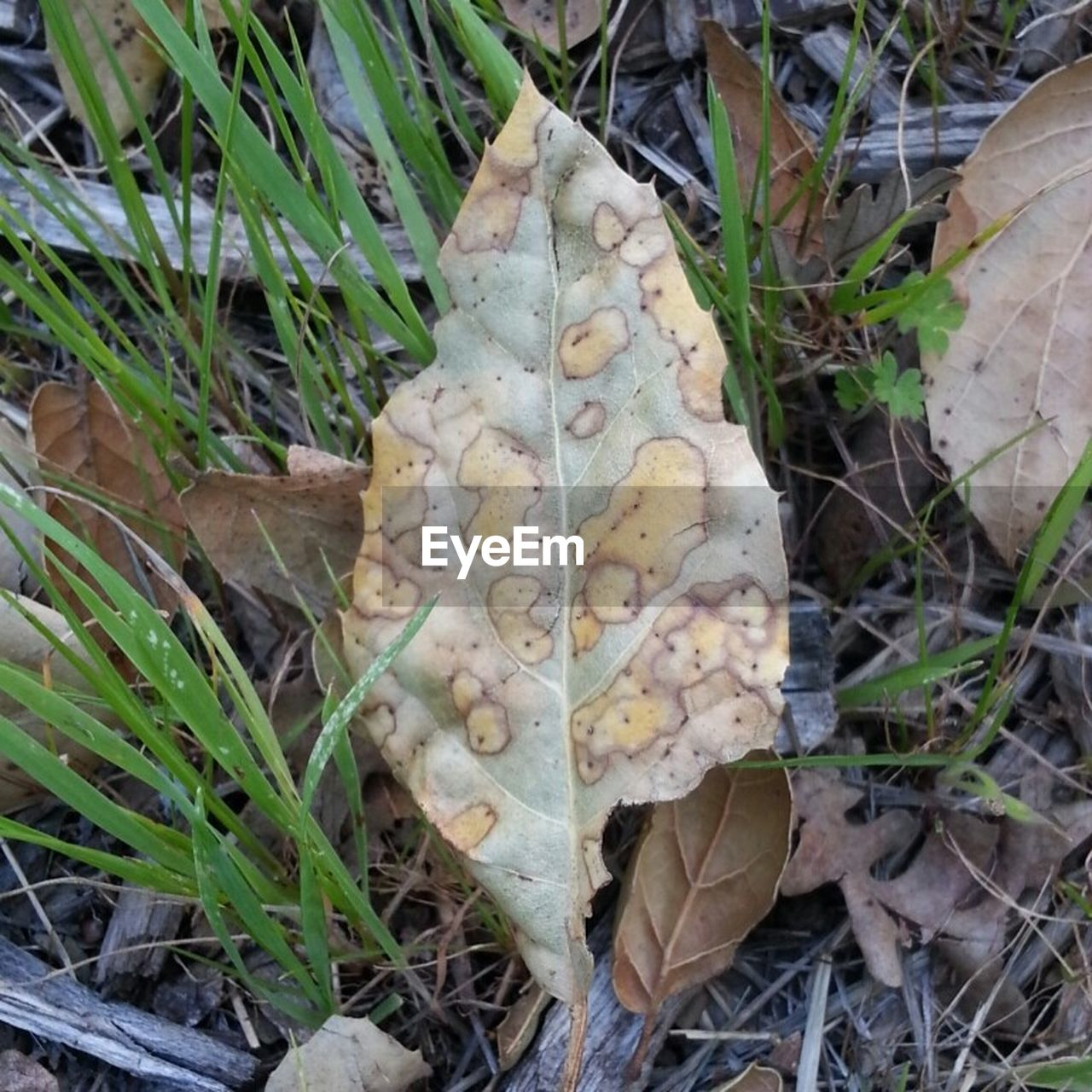leaf, dry, day, high angle view, autumn, outdoors, change, fallen, nature, fragility, no people, close-up