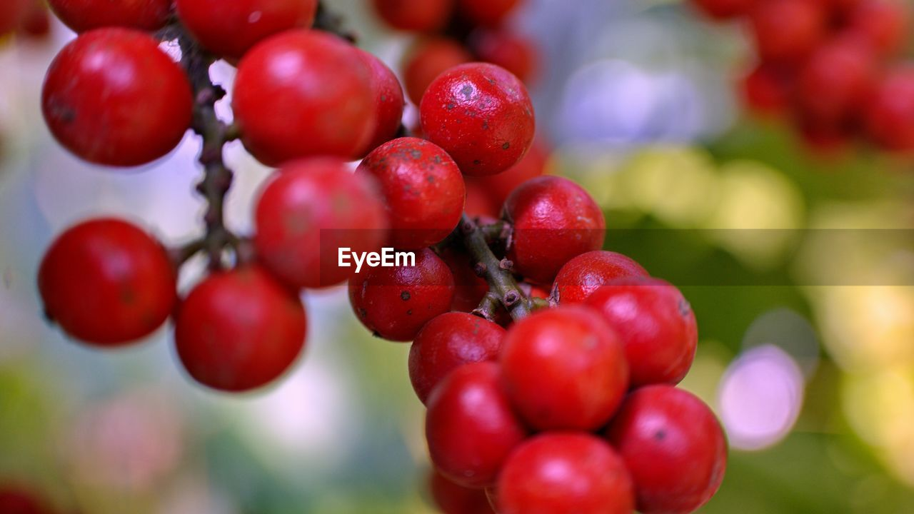 fruit, red, food and drink, growth, focus on foreground, healthy eating, freshness, nature, close-up, tree, food, rowanberry, outdoors, no people, day, water, beauty in nature