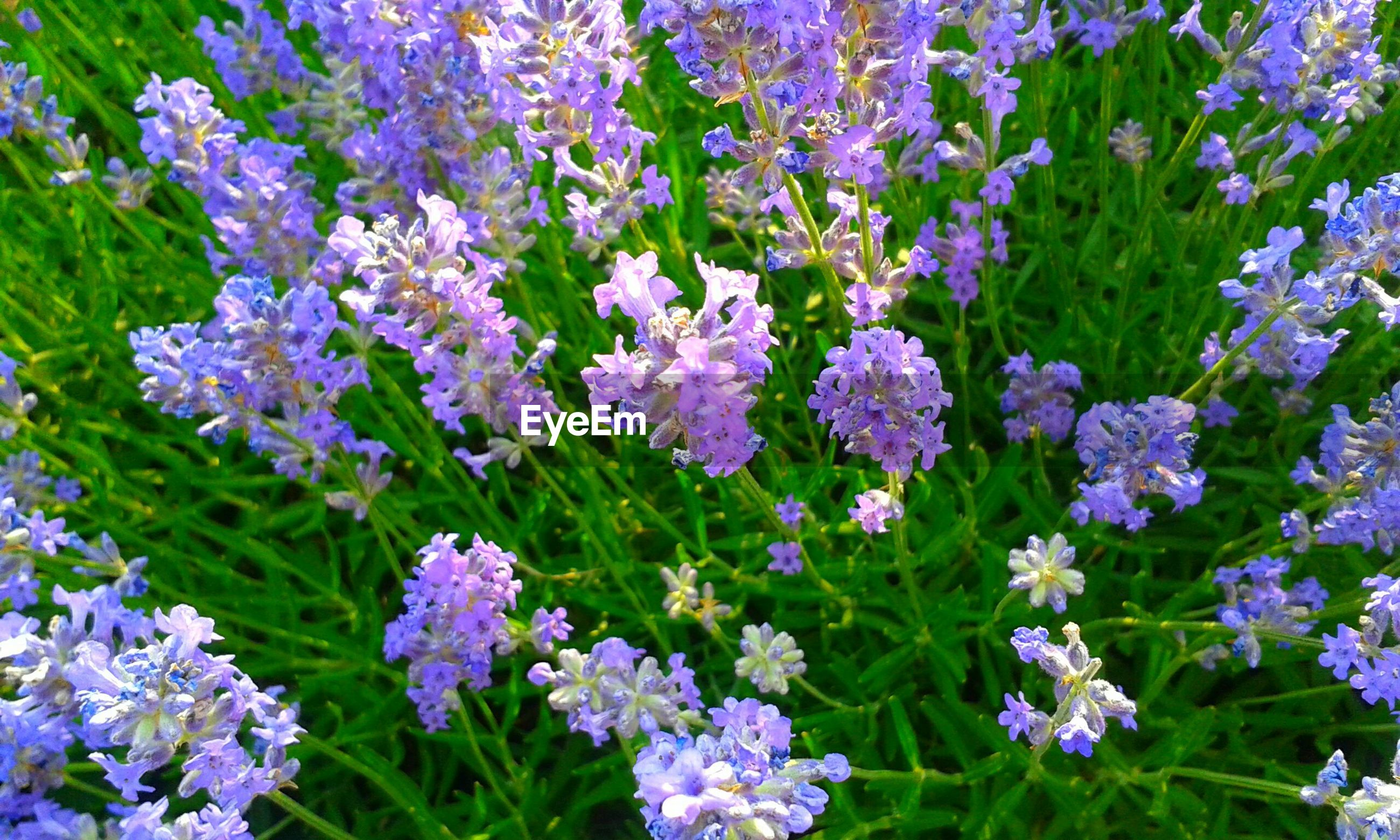 flower, plant, growth, nature, green color, beauty in nature, purple, fragility, full frame, no people, day, blooming, backgrounds, outdoors, freshness, flower head, close-up