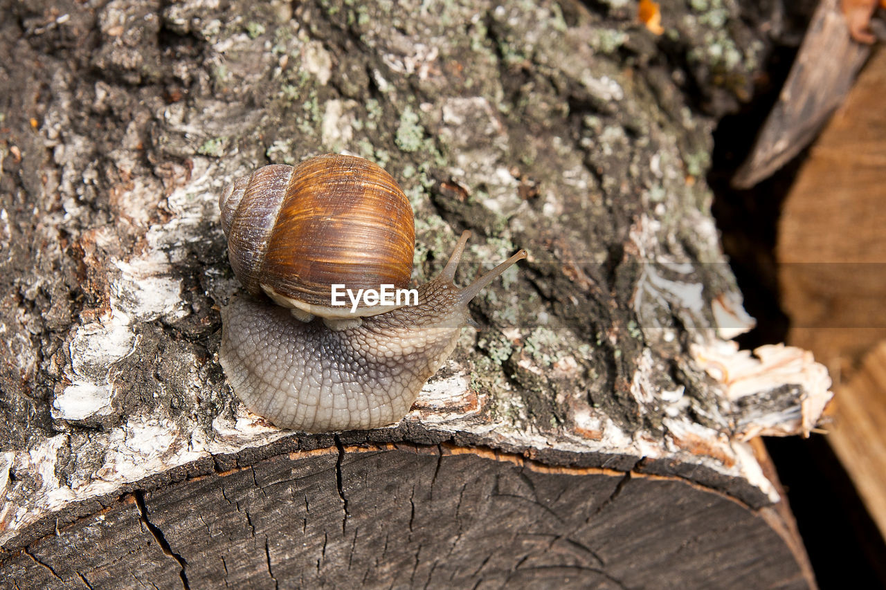 animal, animal wildlife, animal themes, animals in the wild, invertebrate, one animal, mollusk, gastropod, close-up, shell, no people, snail, animal shell, day, nature, tree, insect, tree trunk, animal body part, focus on foreground, outdoors