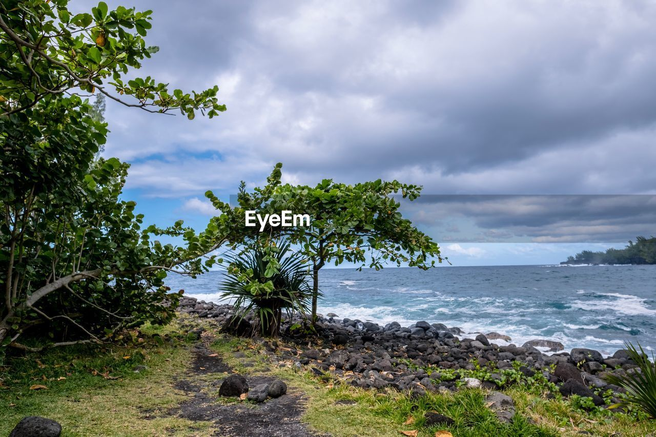 cloud - sky, sky, plant, water, tree, sea, beauty in nature, nature, scenics - nature, land, tranquility, tranquil scene, growth, beach, day, solid, green color, no people, rock, outdoors, horizon over water