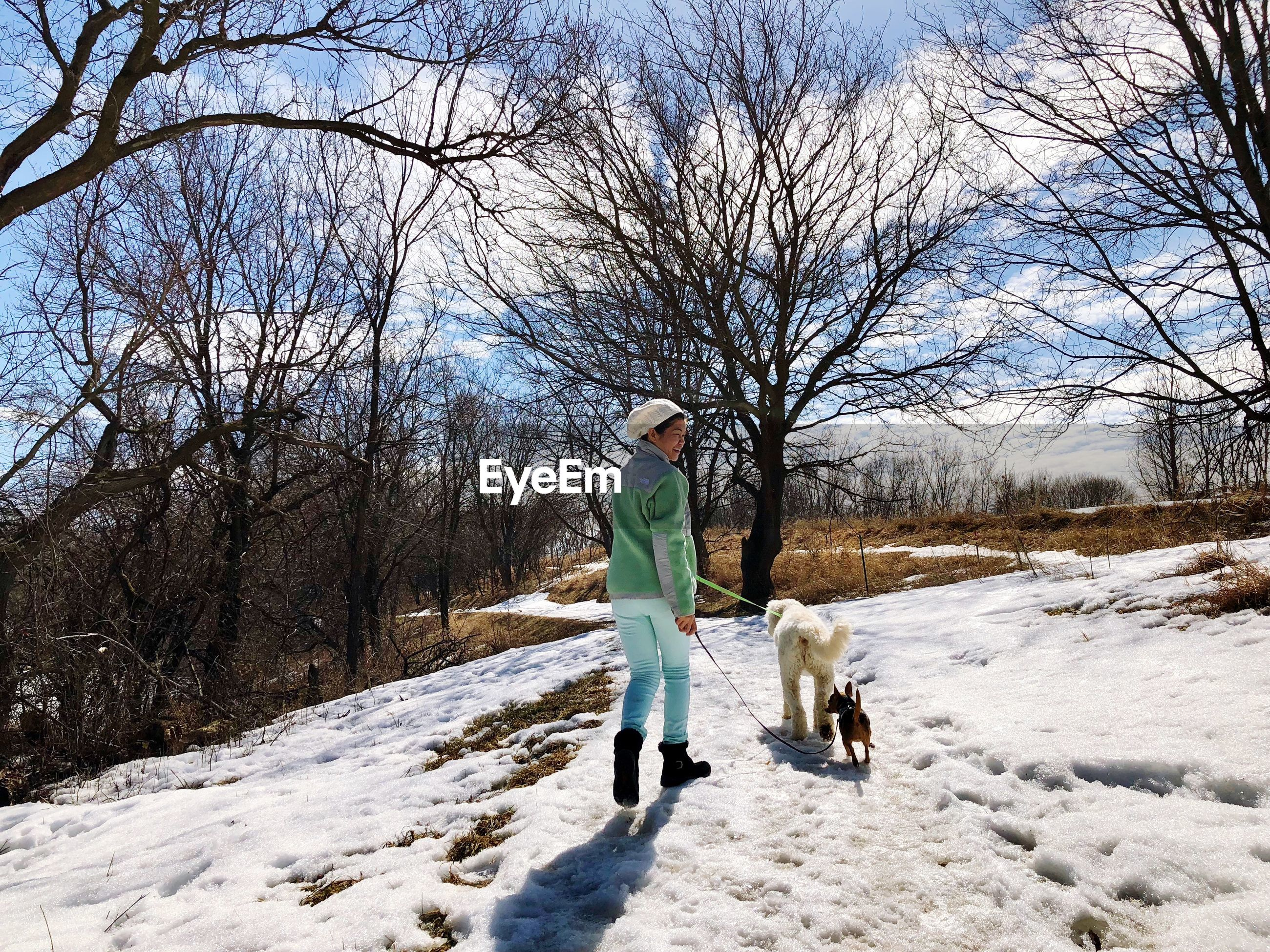 Woman walking with dogs on snow covered field against bare trees