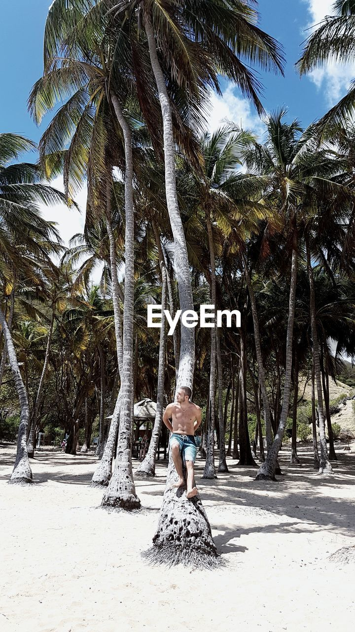 Man And Palm Trees On Beach