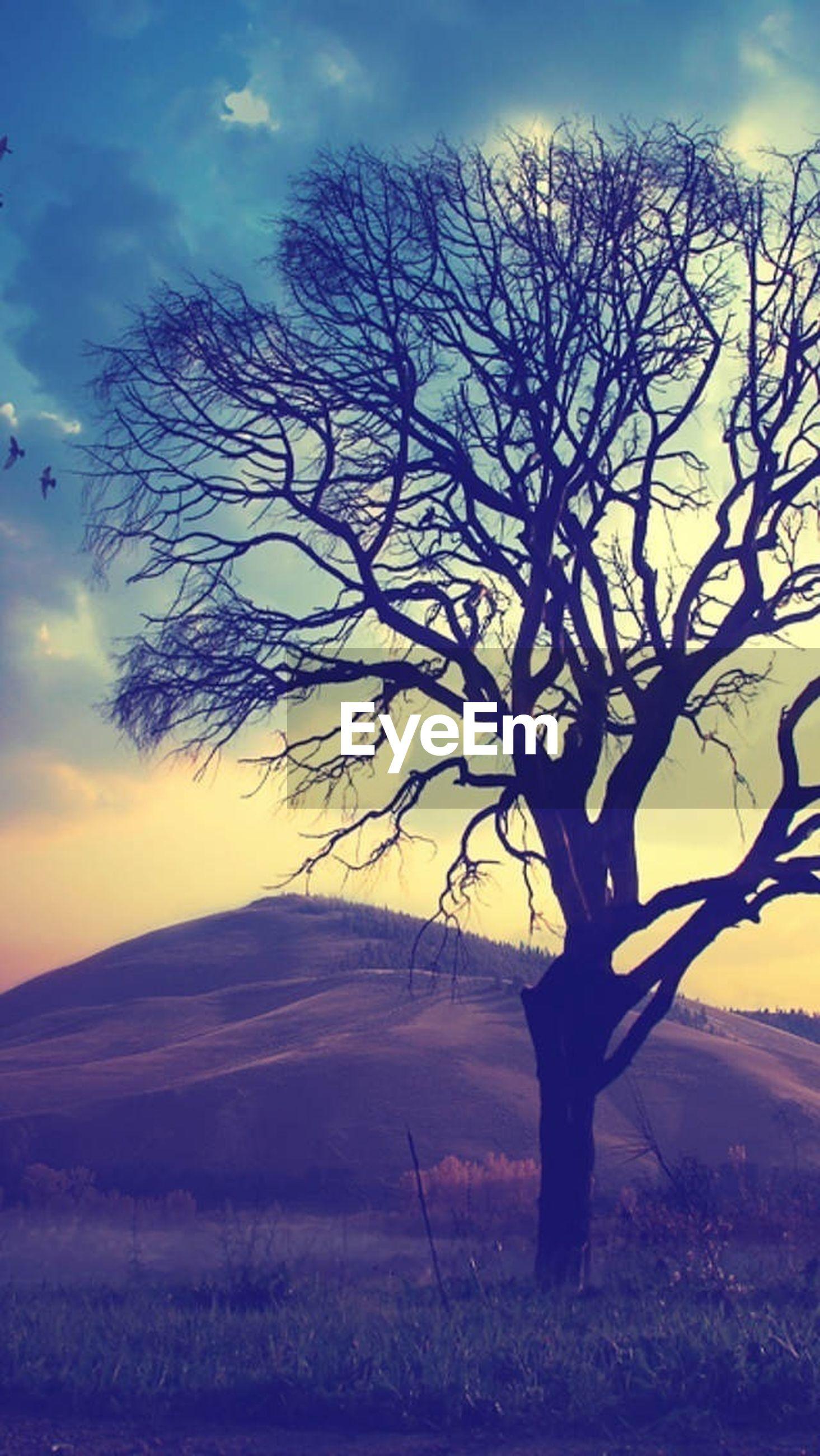 bare tree, tranquil scene, tranquility, sky, landscape, scenics, sunset, tree, silhouette, beauty in nature, nature, branch, field, cloud - sky, non-urban scene, cloud, horizon over land, single tree, idyllic, remote