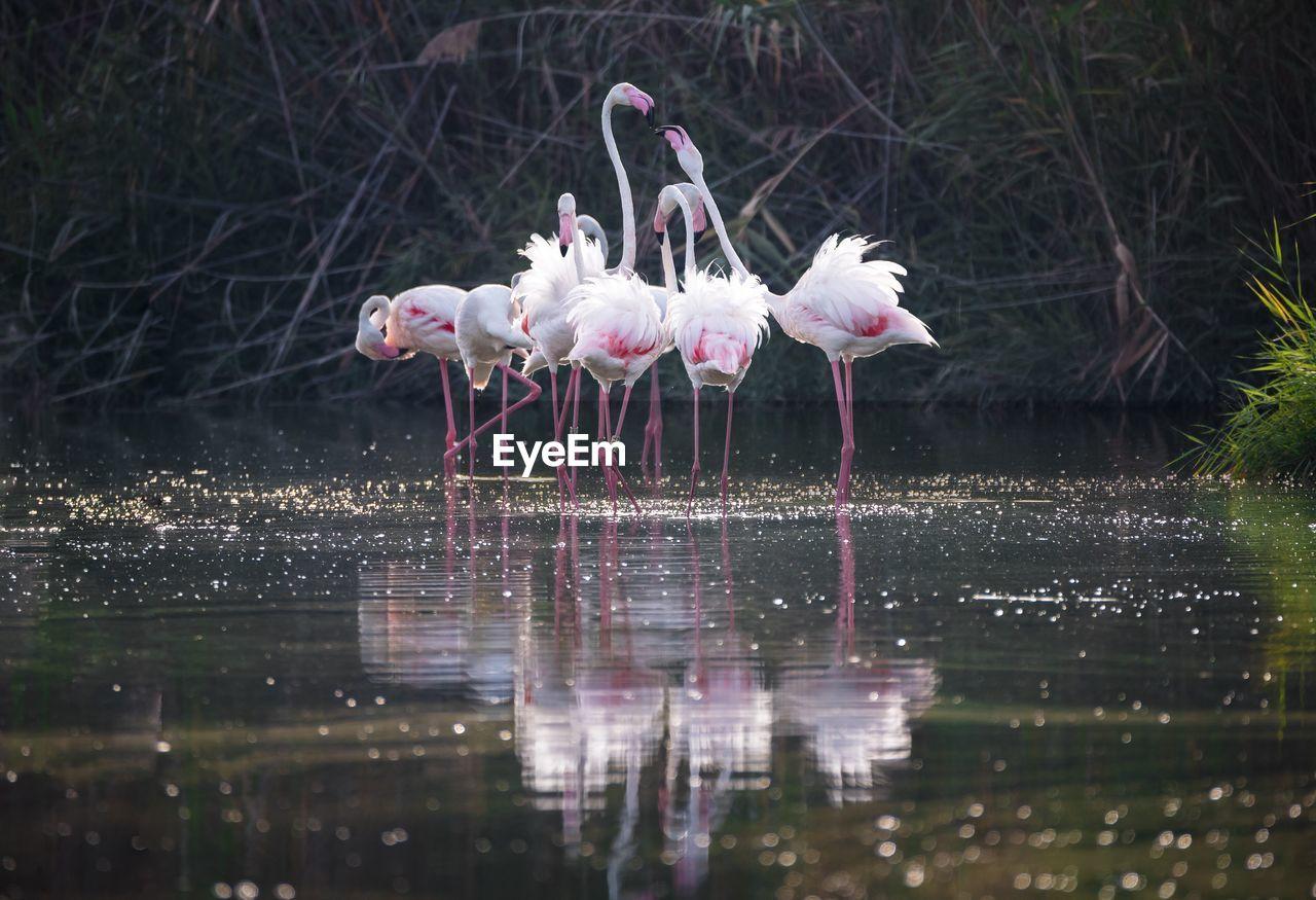Flamingoes Standing In Lake