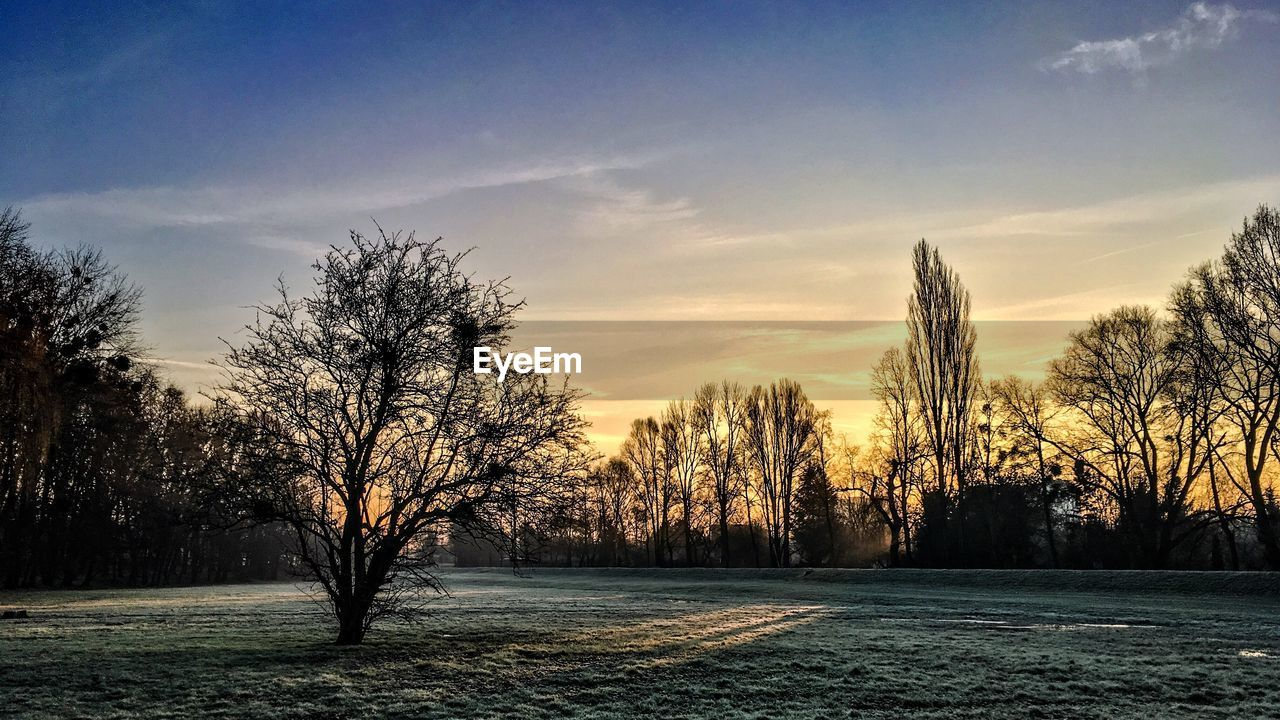 tree, nature, tranquility, beauty in nature, no people, scenics, landscape, tranquil scene, sunset, sky, outdoors, field, bare tree, snow, day