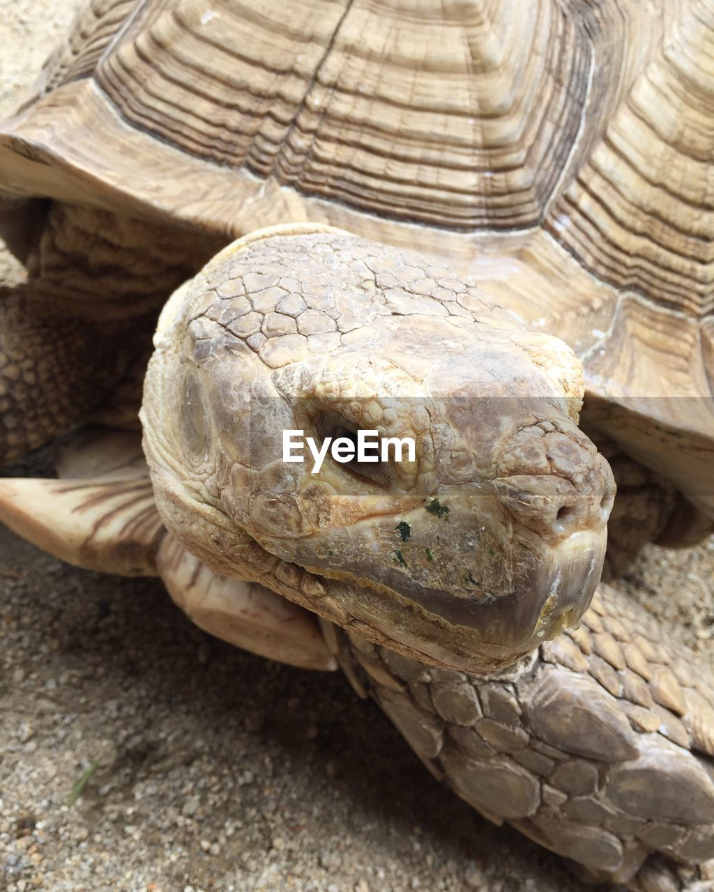 reptile, tortoise, one animal, animal head, animals in the wild, animal themes, animal wildlife, tortoise shell, ancient, close-up, day, no people, outdoors, nature