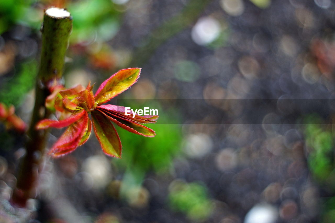 growth, leaf, focus on foreground, day, nature, outdoors, close-up, beauty in nature, no people, fragility, freshness, flower