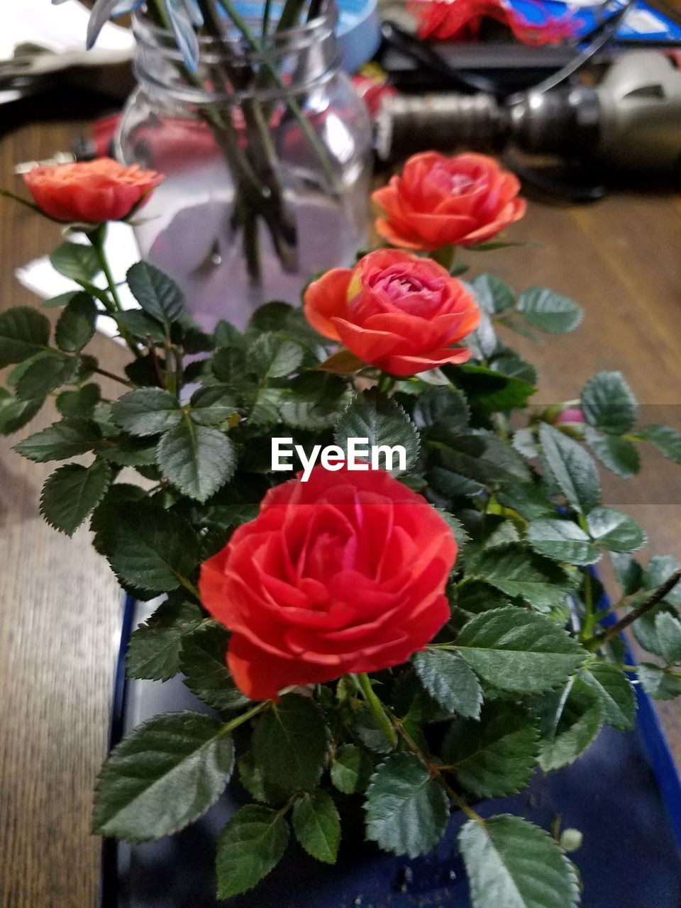 flowering plant, flower, plant, beauty in nature, rose, rose - flower, plant part, table, freshness, fragility, leaf, close-up, vulnerability, petal, flower head, indoors, red, inflorescence, nature, no people, flower arrangement, bouquet, bunch of flowers