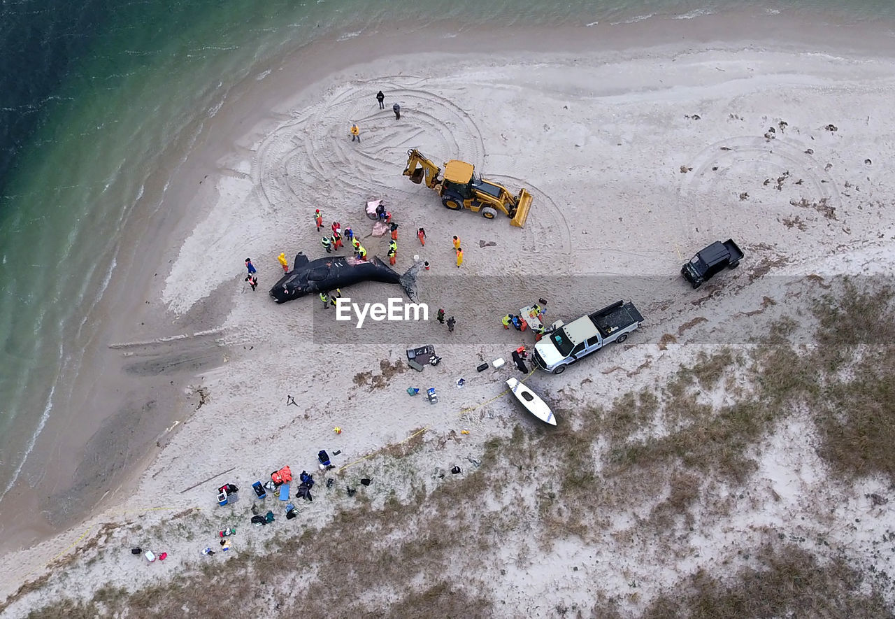 Aerial view of people by dead whale