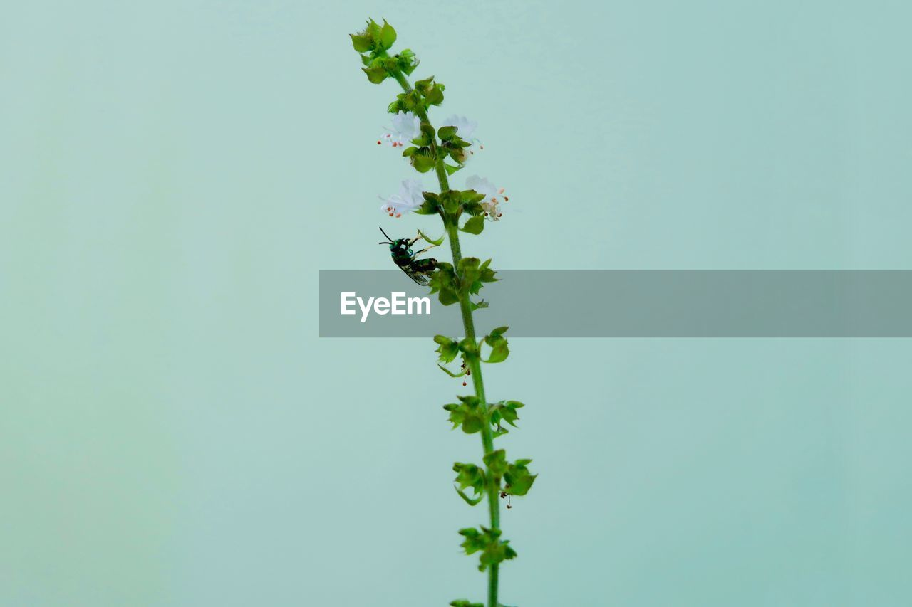 plant, growth, beauty in nature, flower, flowering plant, nature, freshness, copy space, fragility, vulnerability, no people, green color, close-up, day, tranquility, clear sky, sky, leaf, plant part, outdoors, flower head