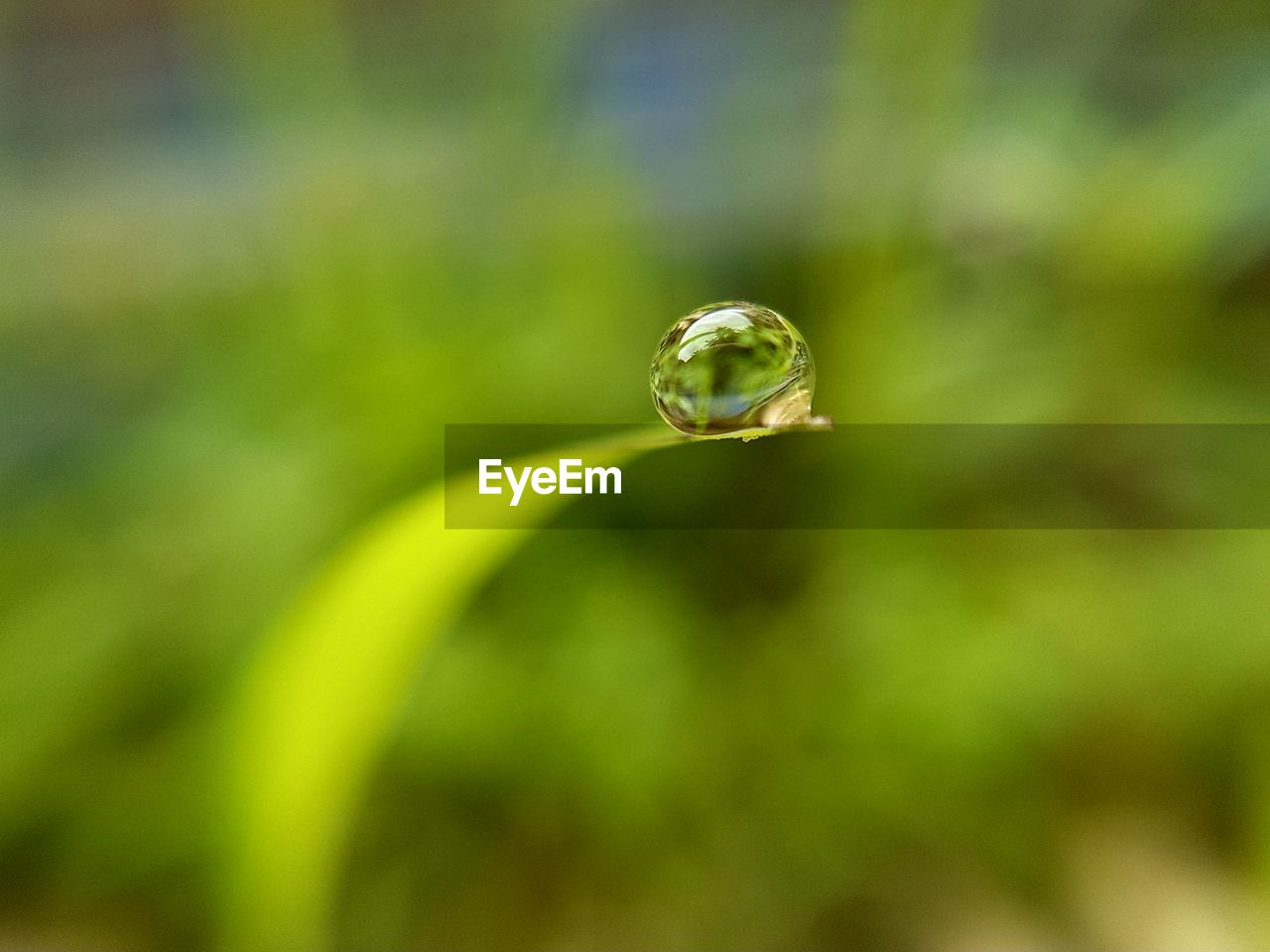 plant, vulnerability, green color, close-up, fragility, growth, selective focus, beauty in nature, nature, focus on foreground, day, no people, freshness, plant part, leaf, drop, outdoors, water, tranquility, curled up, purity, dew, blade of grass