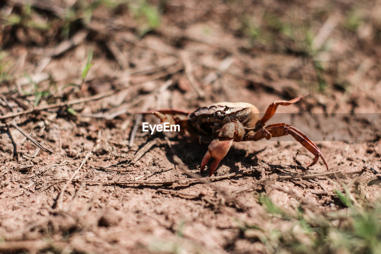 one animal, animal wildlife, animal themes, animal, animals in the wild, invertebrate, selective focus, close-up, land, day, insect, no people, nature, field, arthropod, arachnid, crab, spider, sunlight, outdoors