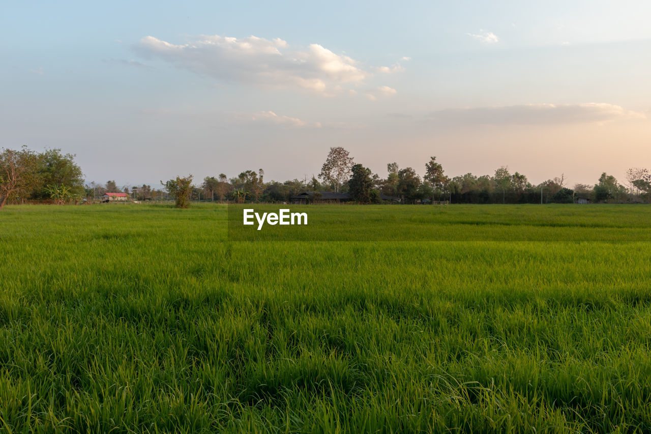 plant, landscape, green color, field, environment, land, sky, beauty in nature, scenics - nature, growth, tree, tranquil scene, tranquility, grass, agriculture, rural scene, nature, no people, cloud - sky, crop