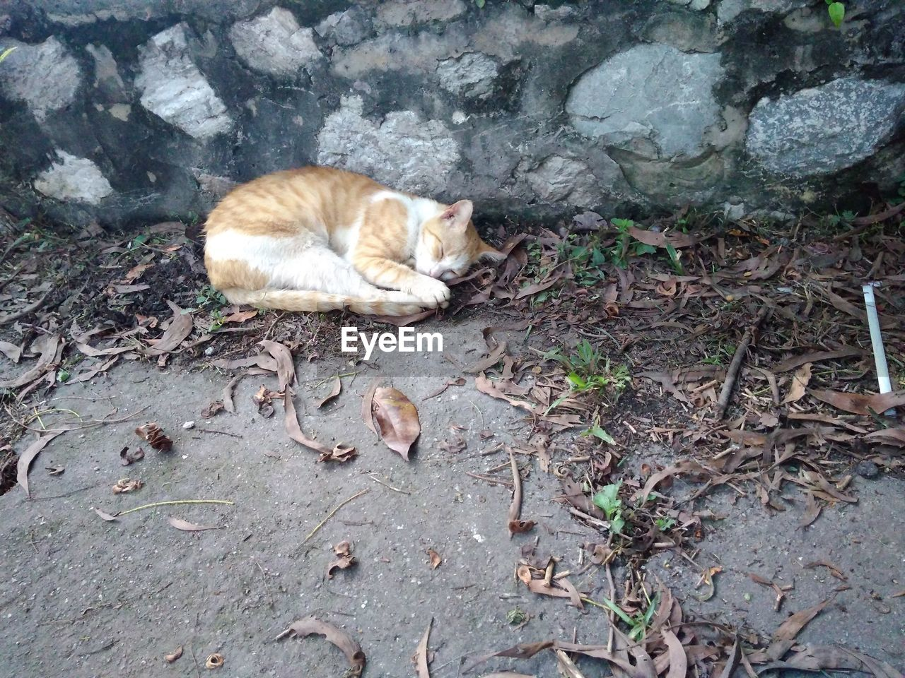 domestic cat, domestic animals, pets, animal themes, relaxation, lying down, mammal, high angle view, one animal, outdoors, leaf, no people, feline, day, ginger cat, nature