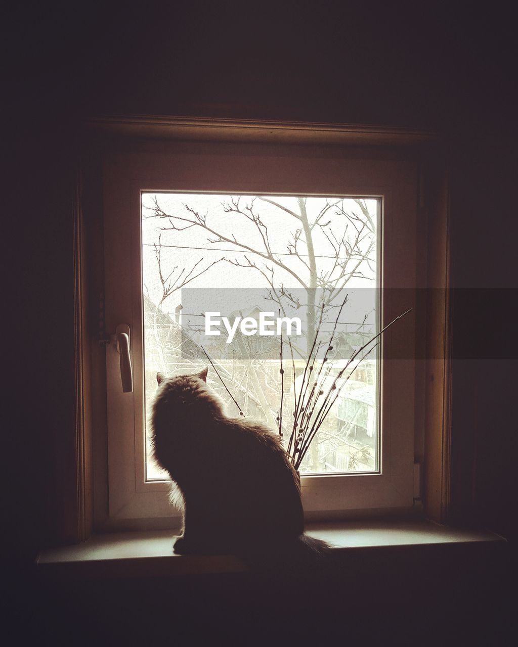 window, animal themes, domestic, domestic animals, mammal, pets, one animal, indoors, glass - material, animal, vertebrate, cat, transparent, domestic cat, tree, feline, home interior, no people, sitting, day