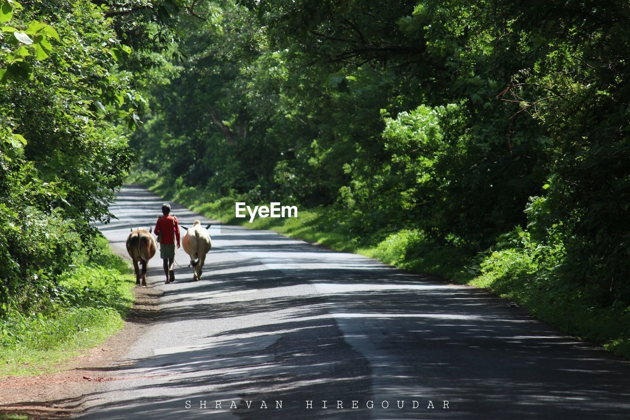 rear view, road, walking, tree, togetherness, the way forward, full length, domestic animals, real people, day, riding, transportation, outdoors, men, leisure activity, mammal, nature, lifestyles, women, pets, friendship, adult, people