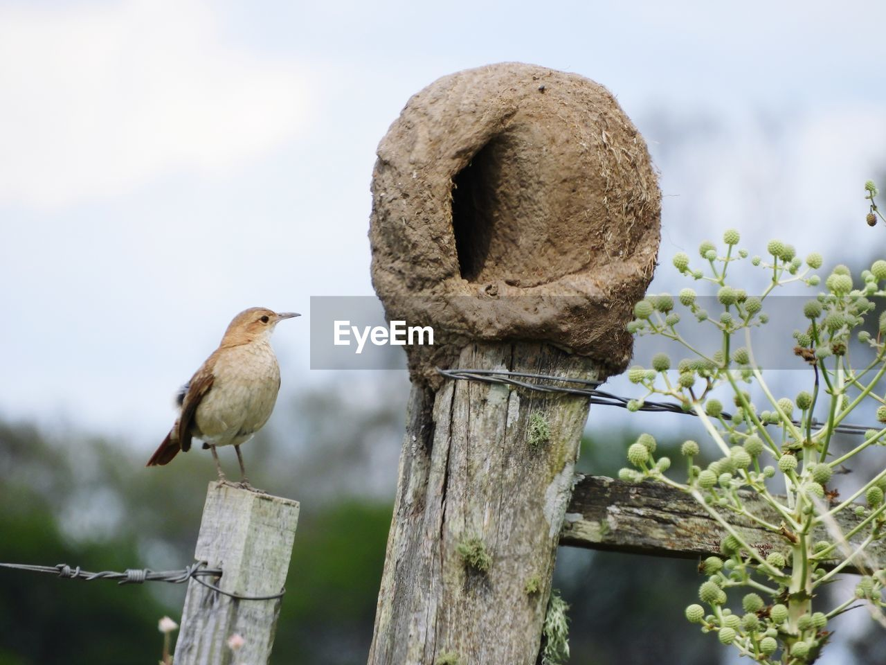 animal themes, perching, animals in the wild, bird, focus on foreground, one animal, animal wildlife, day, no people, outdoors, wooden post, nature, wood - material, beauty in nature, close-up, sky