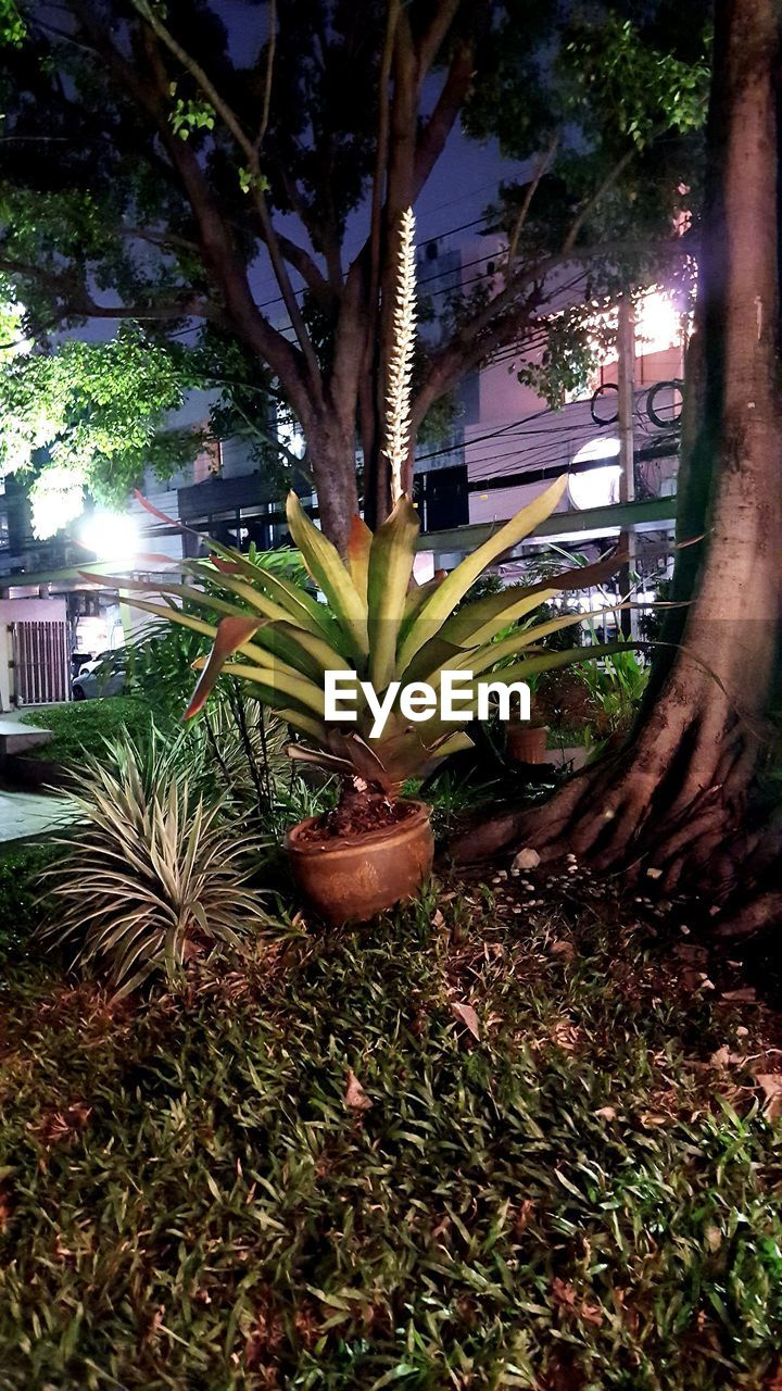 growth, tree, plant, outdoors, nature, no people, night, freshness, close-up