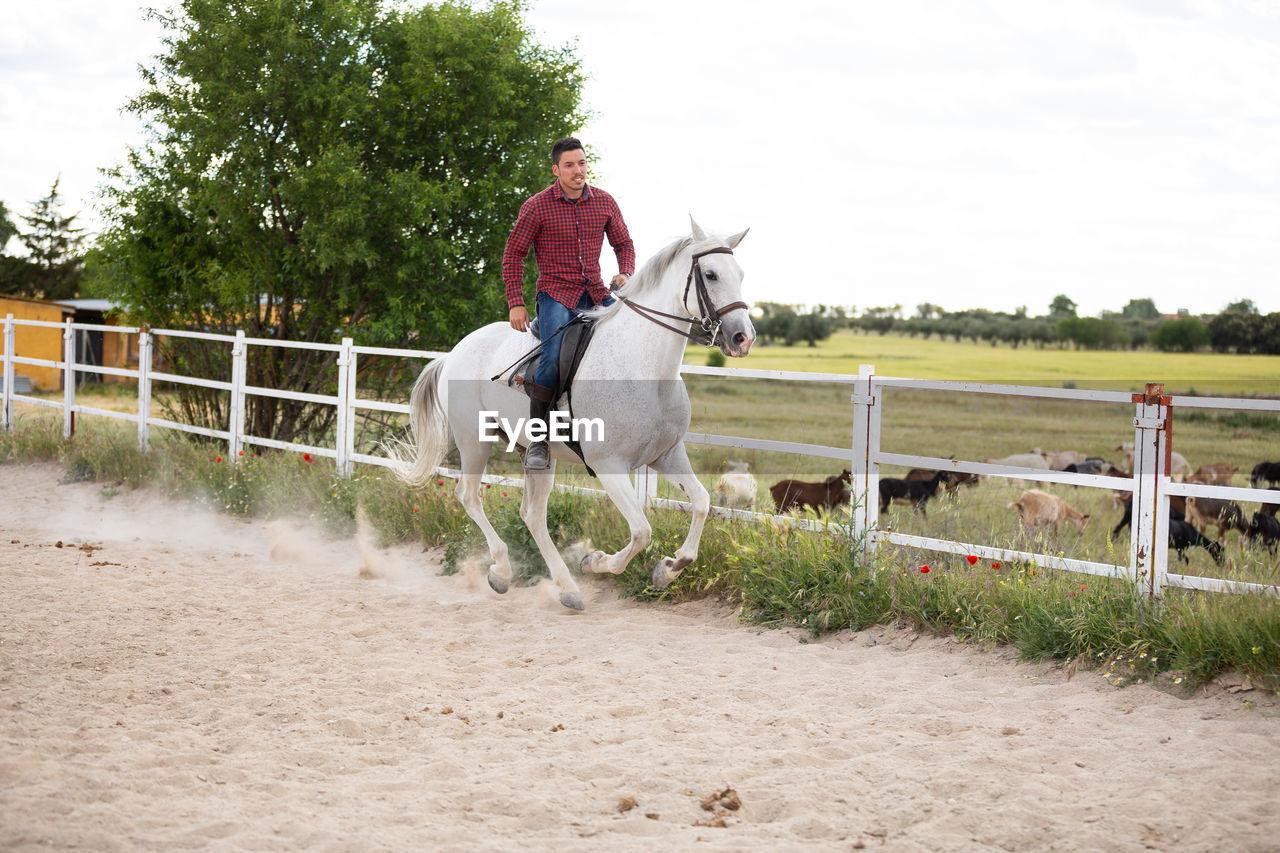 HORSE RIDING HORSES AT RANCH