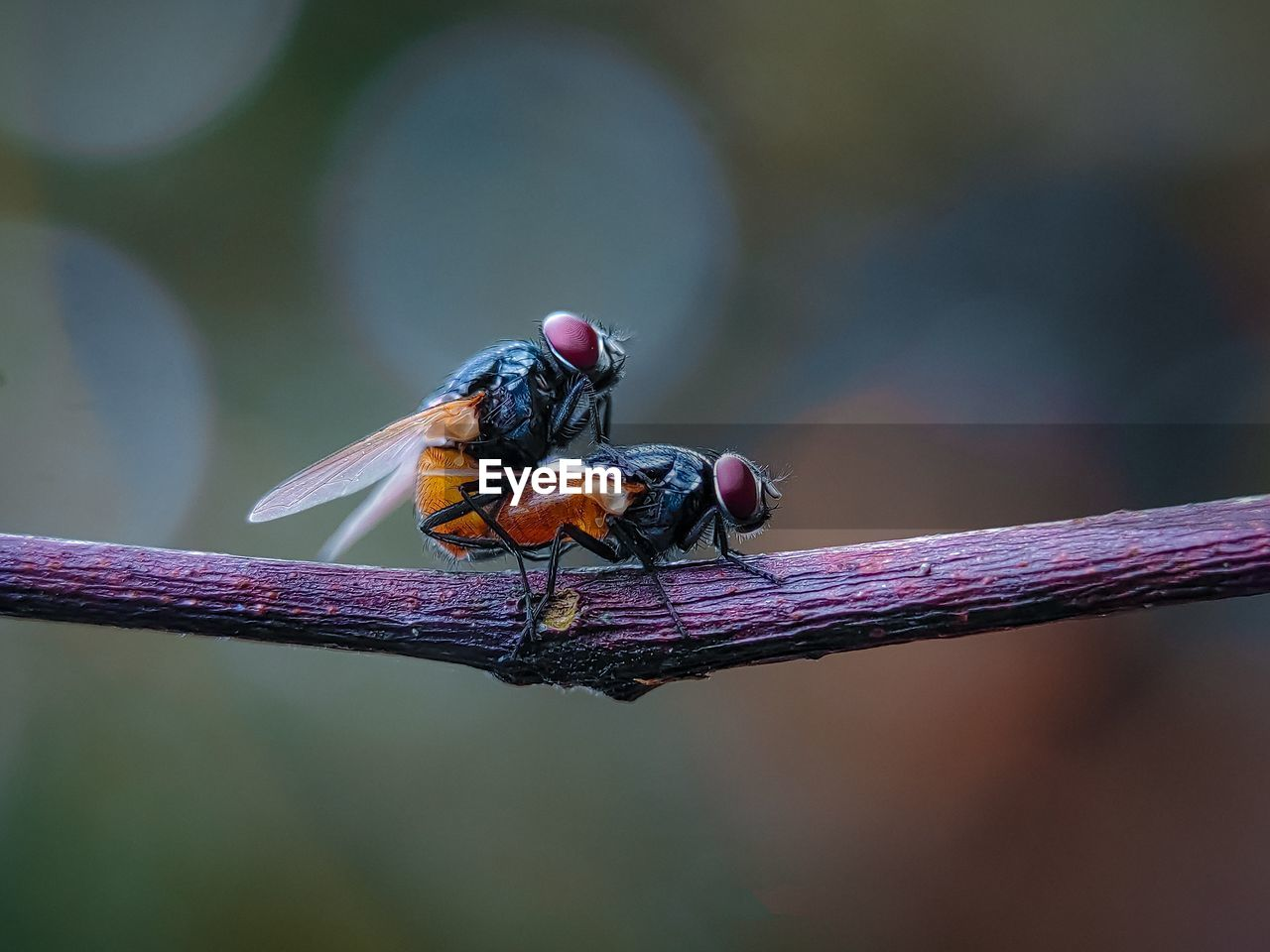 Close-up of insect perching on twig