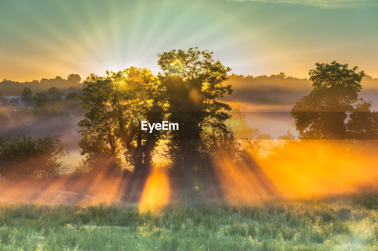plant, beauty in nature, tree, sunset, sky, tranquil scene, tranquility, sunlight, scenics - nature, sun, growth, sunbeam, field, idyllic, land, orange color, nature, no people, non-urban scene, grass, lens flare, outdoors, streaming, hazy