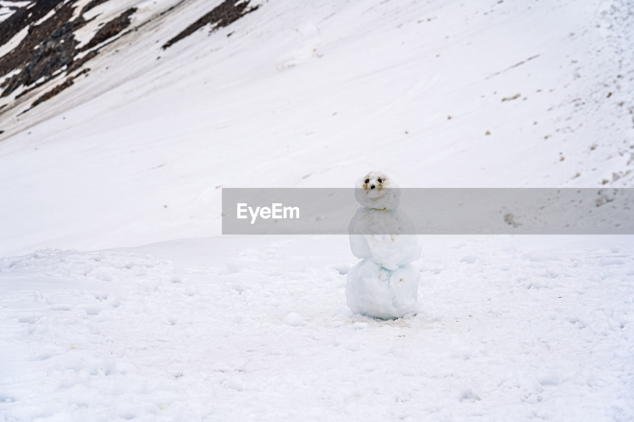 VIEW OF A BIRD ON SNOW