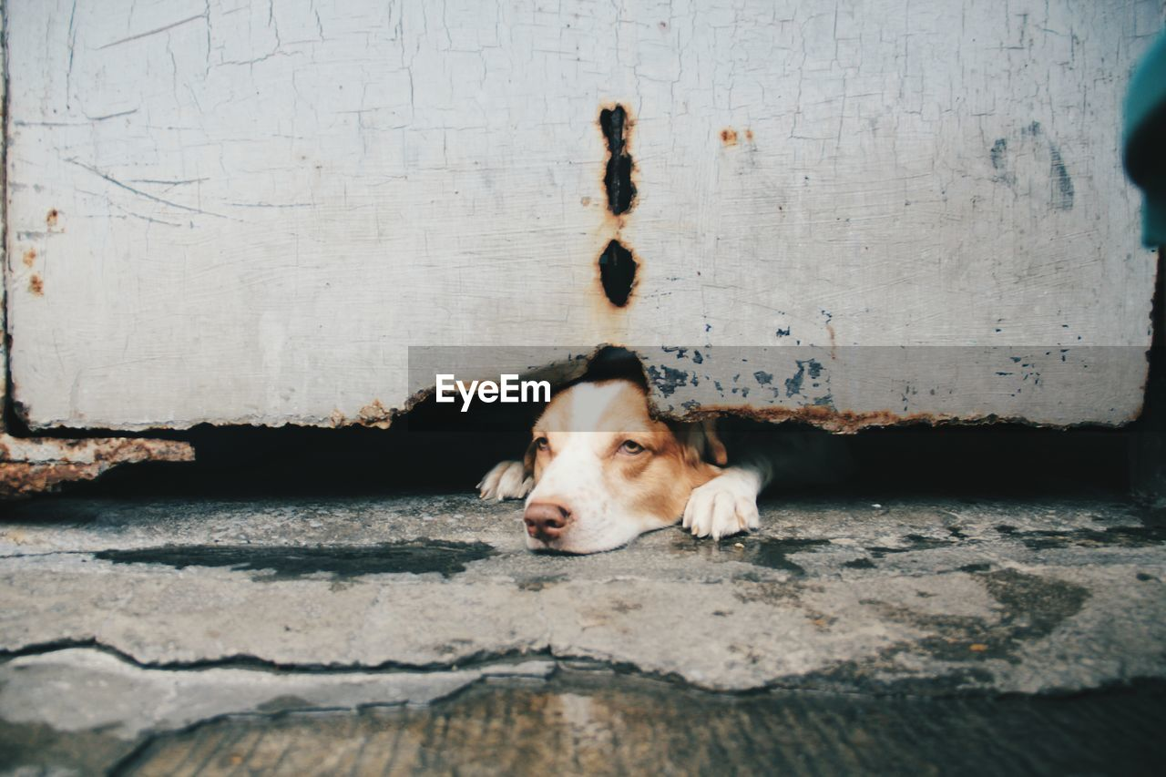 Dog looking away while lying by metal structure