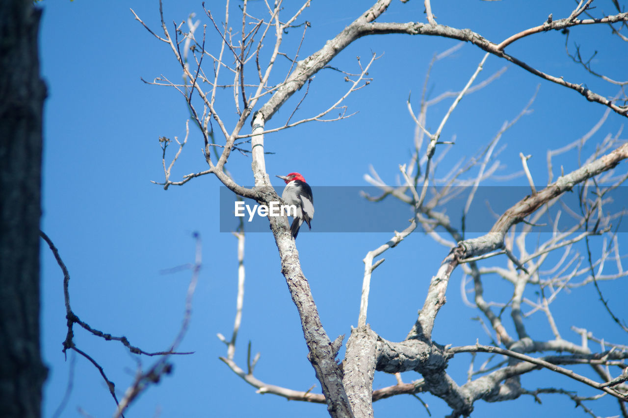 Side-view of bird perched on branch