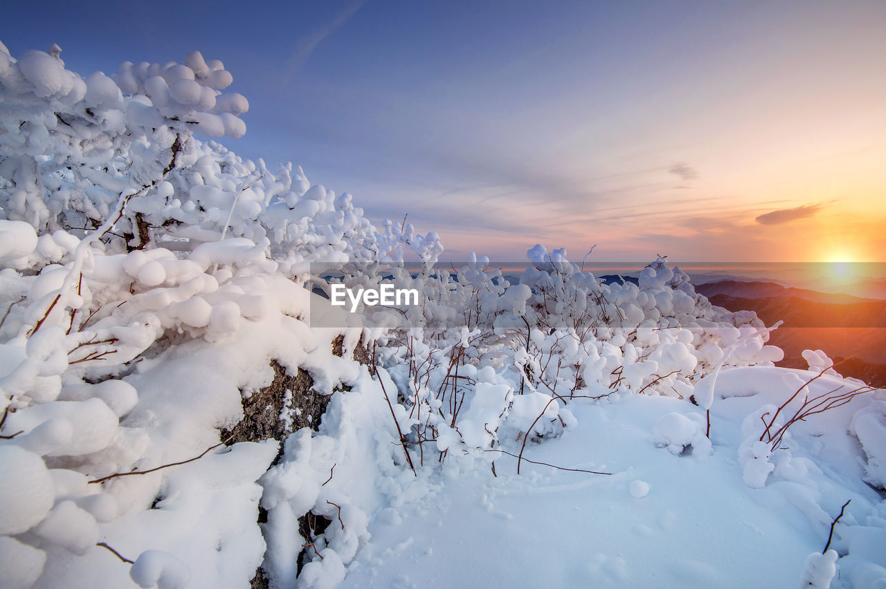 winter, cold temperature, nature, snow, beauty in nature, white color, tranquility, tranquil scene, scenics, sky, outdoors, no people, sunset, sunlight, landscape, day, tree