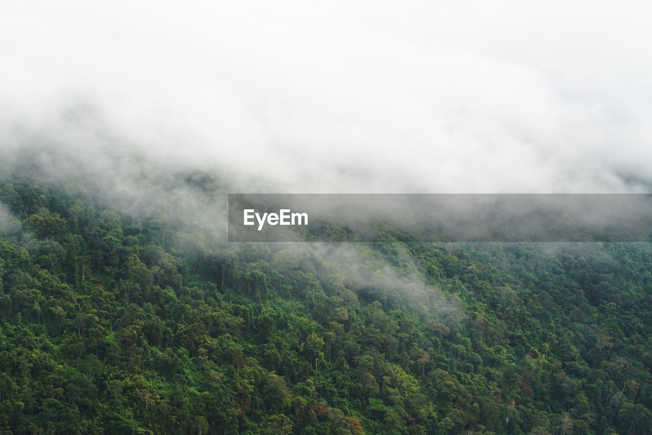 beauty in nature, scenics - nature, fog, tranquil scene, tranquility, environment, non-urban scene, mountain, no people, nature, plant, landscape, tree, sky, cloud - sky, day, forest, land, green color, outdoors, hazy