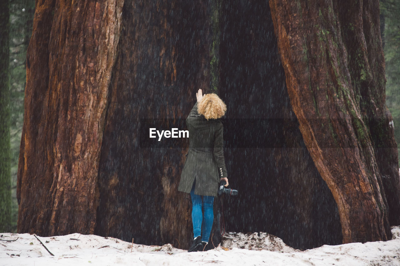 Rear view of woman touching tree trunk during winter