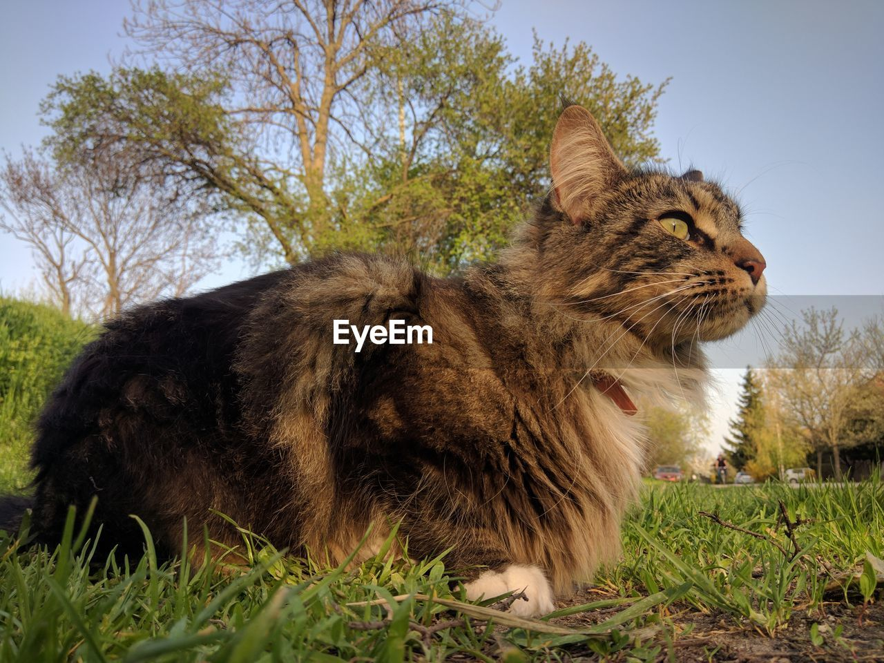 plant, mammal, animal themes, animal, one animal, grass, pets, domestic, sky, domestic animals, feline, cat, tree, land, nature, field, day, no people, vertebrate, domestic cat, outdoors, whisker, profile view