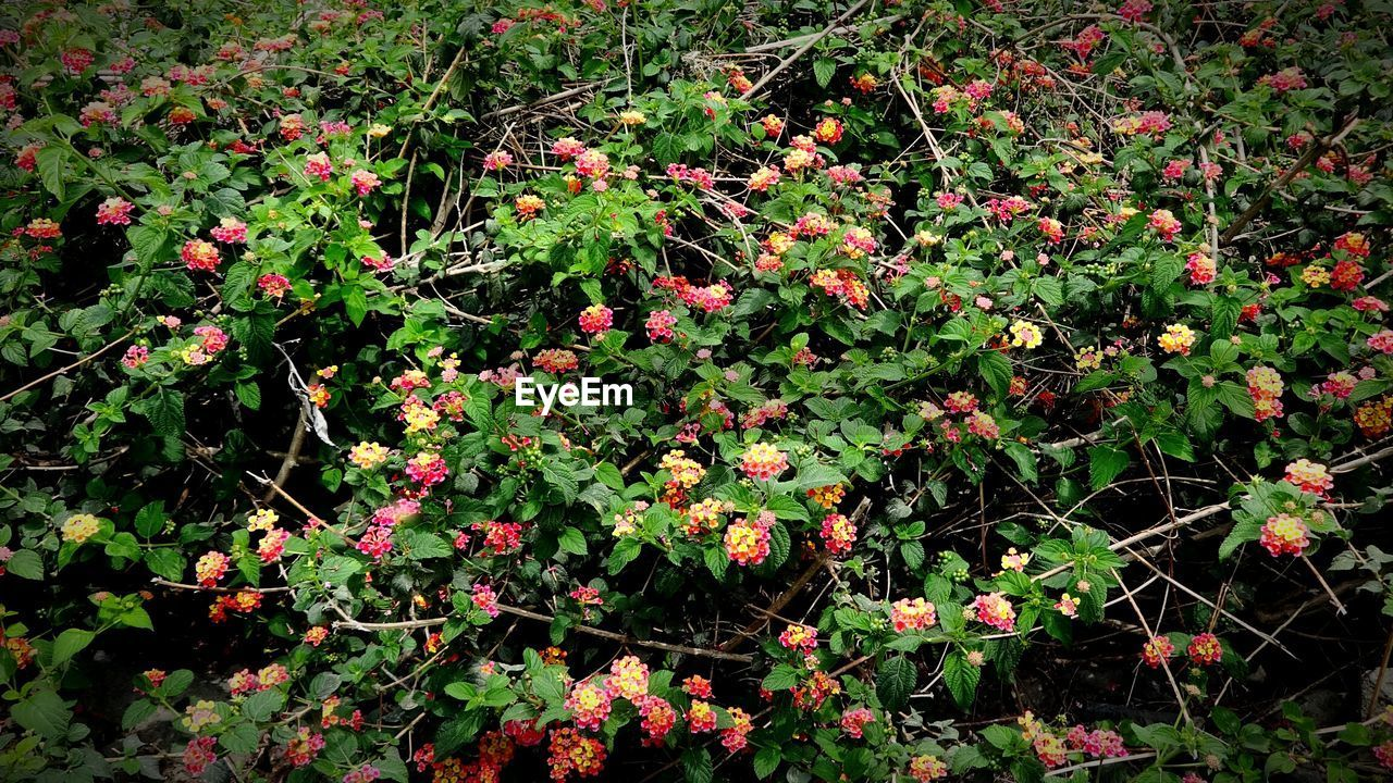 shrub, growth, botanical, foliage, red, flower, blossom, botany, vegetation, railing, colorful, garden, spring, summer, green, bush, nature, plant, beauty in nature, outdoors, day, no people