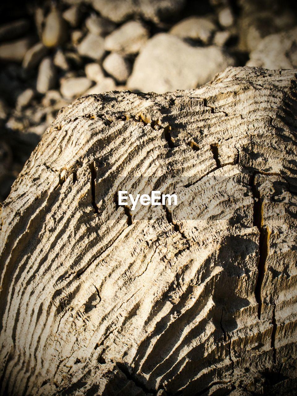 Detail shot of wood grain