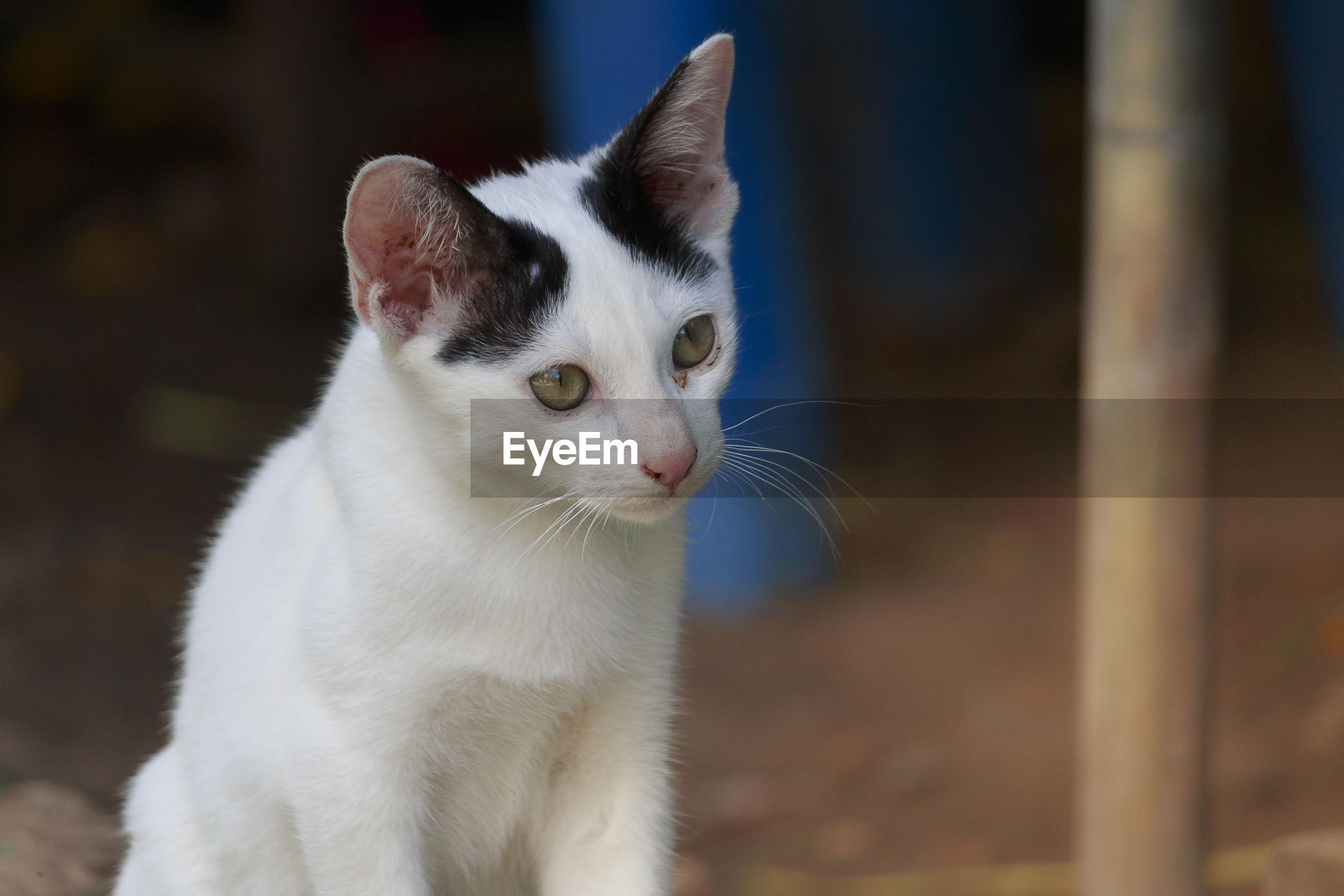 CLOSE-UP OF CAT LOOKING AWAY OUTDOORS