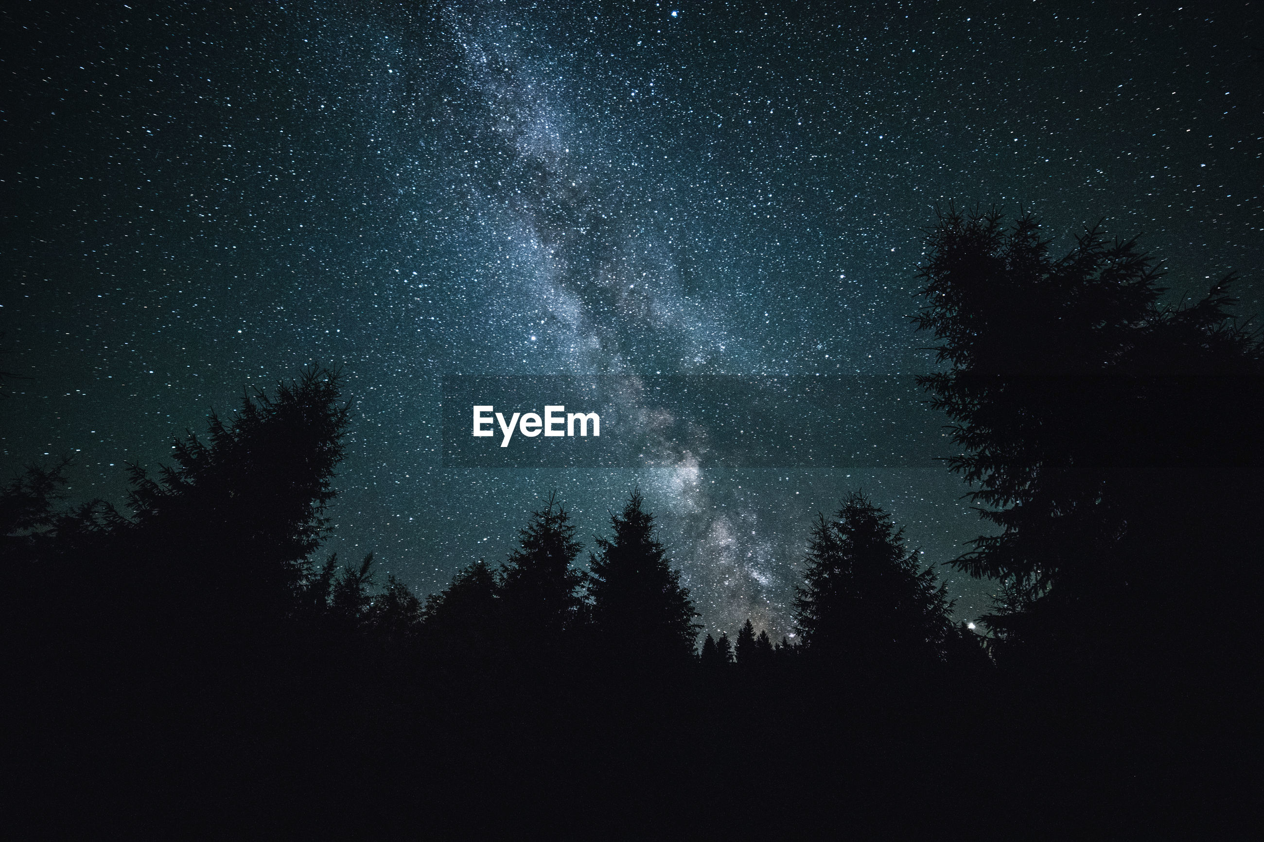 LOW ANGLE VIEW OF SILHOUETTE TREES AGAINST STAR FIELD AT NIGHT