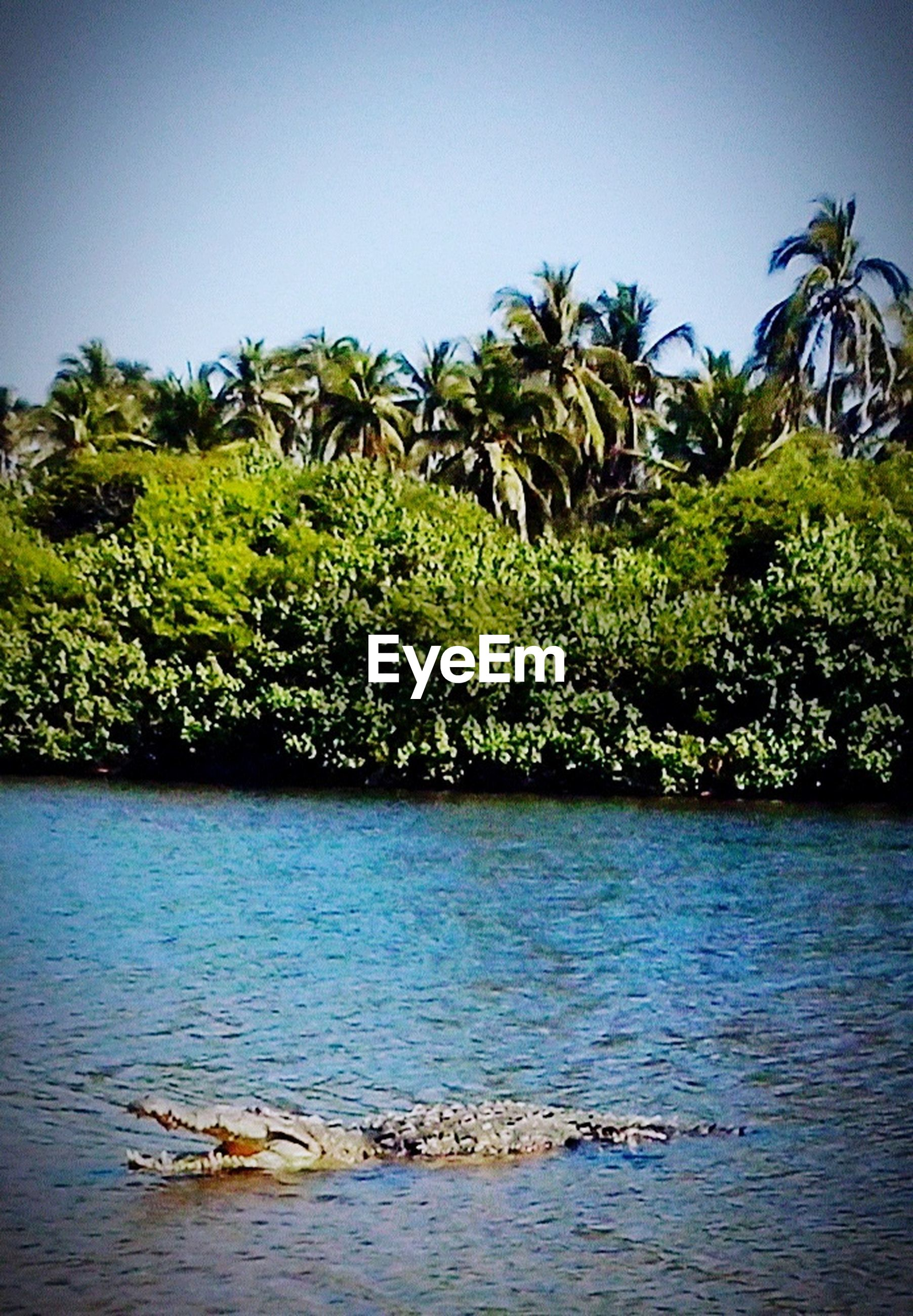 tree, water, growth, tranquility, tranquil scene, nature, beauty in nature, clear sky, waterfront, scenics, palm tree, green color, lake, branch, sky, sea, day, plant, rippled, idyllic