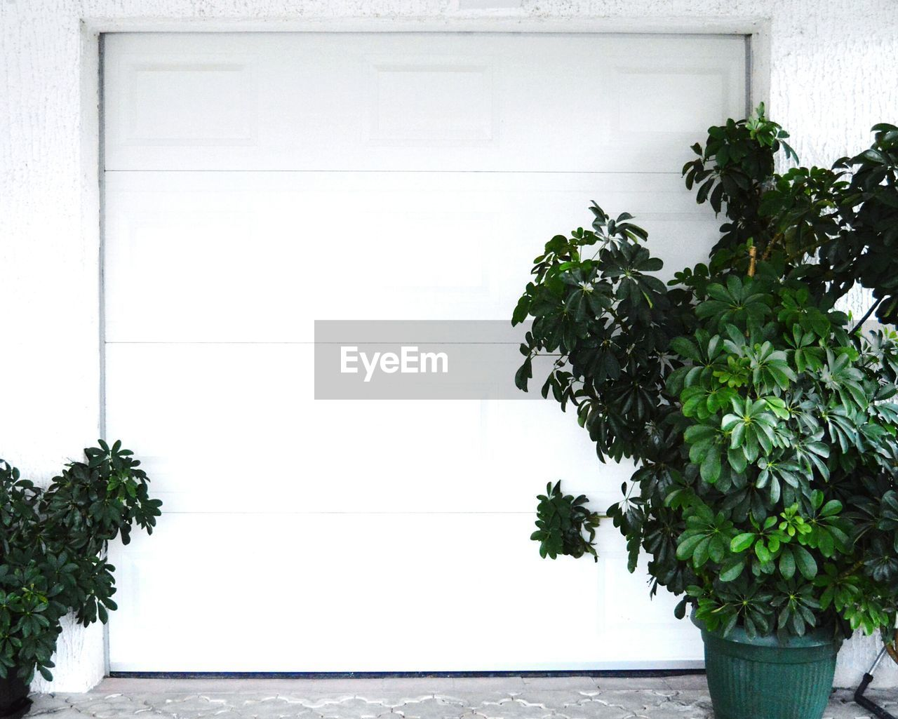Potted plants outside garage