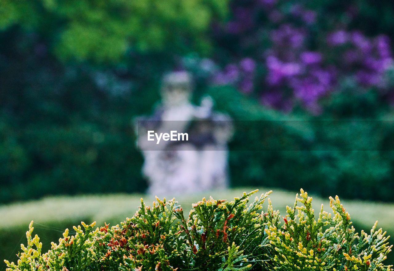 plant, growth, nature, green color, day, flower, flowering plant, tree, beauty in nature, selective focus, no people, freshness, human representation, sculpture, leaf, outdoors, representation, plant part, park - man made space, park, purple