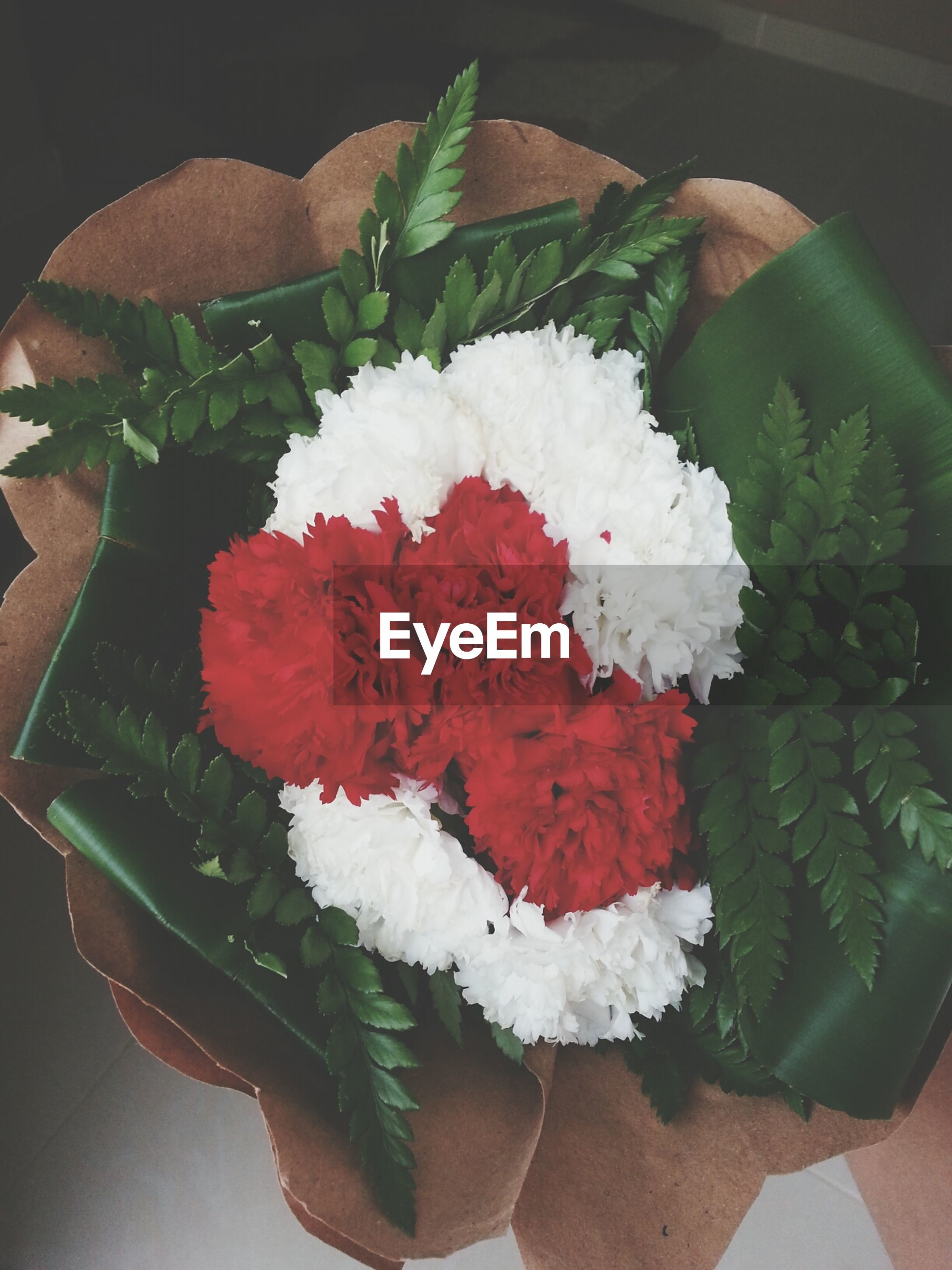 freshness, flower, high angle view, indoors, close-up, leaf, petal, white color, fragility, flower head, still life, plant, no people, nature, green color, growth, beauty in nature, directly above, table, red