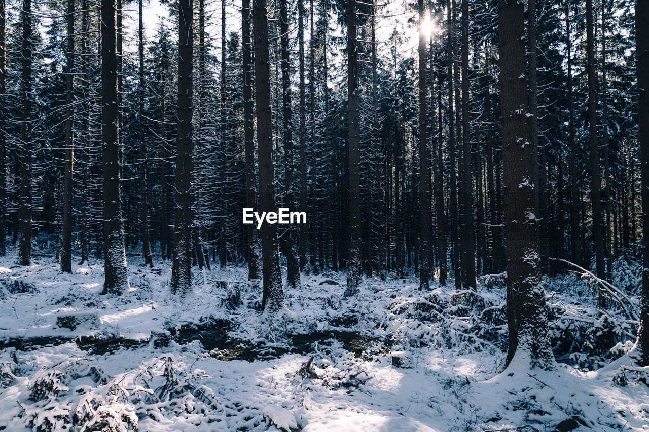 tree, plant, snow, land, forest, winter, cold temperature, beauty in nature, tranquility, tranquil scene, nature, no people, scenics - nature, woodland, growth, non-urban scene, environment, covering, day, snowcapped mountain, coniferous tree, pine woodland