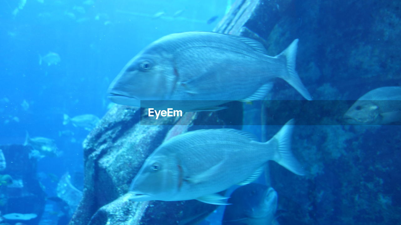 fish, animals in the wild, animal themes, sea life, swimming, no people, nature, underwater, animal wildlife, aquarium, undersea, large group of animals, water, close-up, day