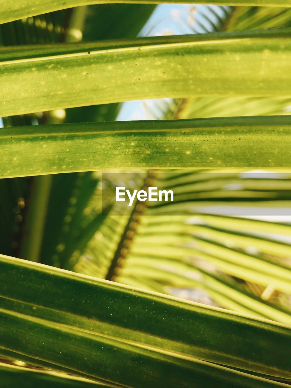 green color, close-up, no people, leaf, plant part, plant, growth, full frame, pattern, day, nature, focus on foreground, beauty in nature, outdoors, backgrounds, selective focus, sunlight, metal, palm tree, palm leaf, leaves, blade of grass