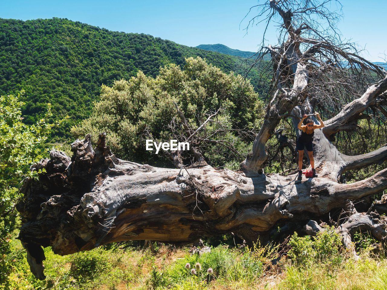 TREES ON LOG AGAINST TREE MOUNTAINS