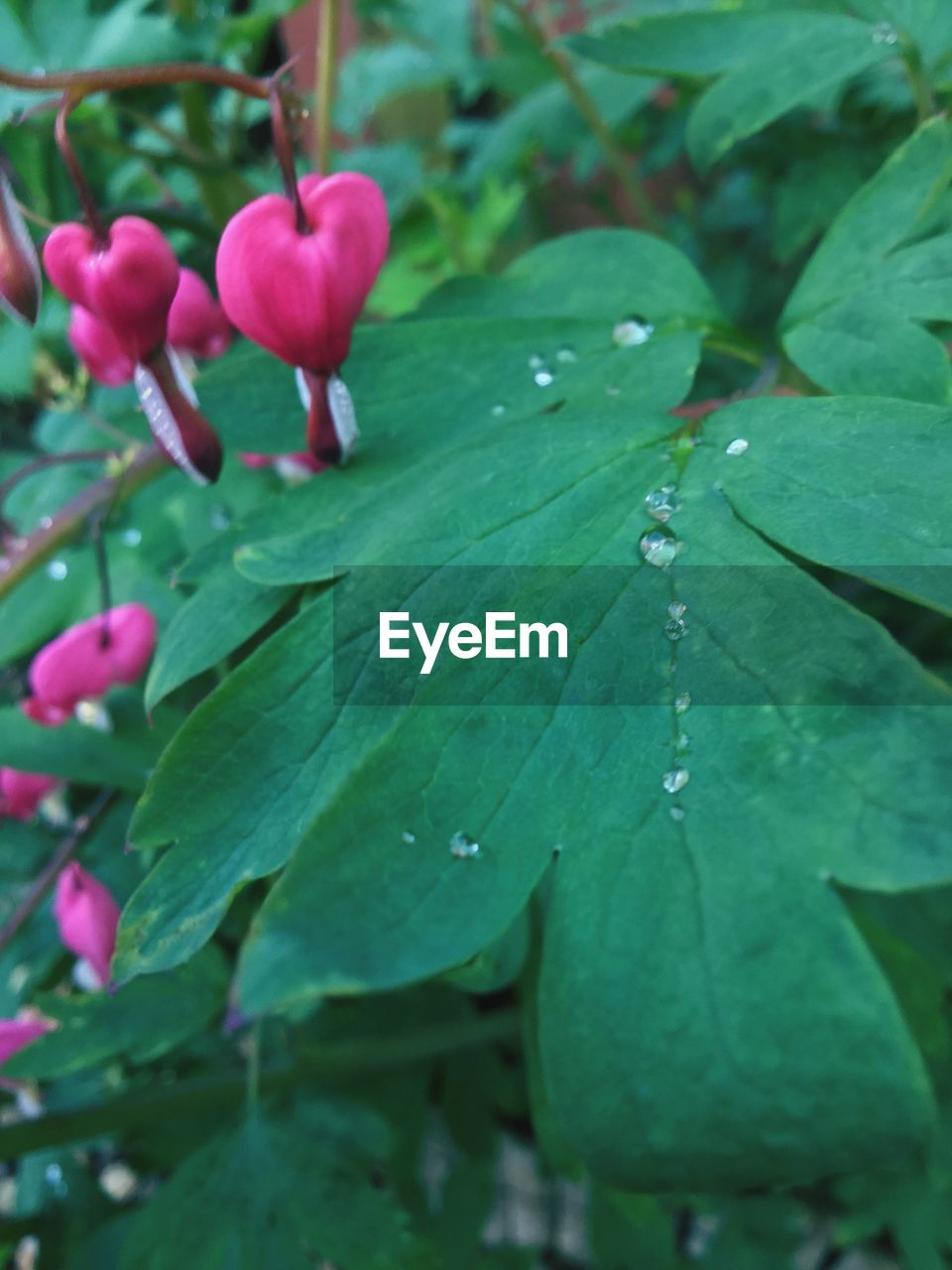 drop, leaf, nature, growth, beauty in nature, freshness, water, no people, day, green color, wet, fragility, close-up, outdoors, flower